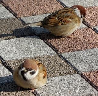20121225_sparrow_0140_w800.jpg